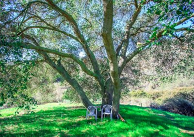 Linda Kasian Photography-real-estate-photography-los-angeles-green-leaf